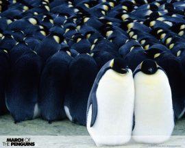 Papel de parede Pinguim – Turma