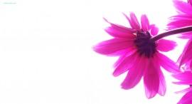 Papel de parede Pink Flower