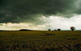 Papel de parede Plantação – Dia chuvoso