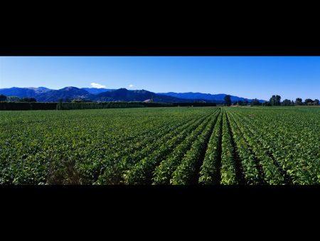 Papel de parede Plantação bonita para download gratuito. Use no computador pc, mac, macbook, celular, smartphone, iPhone, onde quiser!