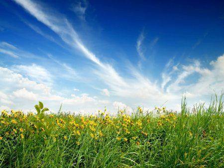 Papel de parede Plantação com flores para download gratuito. Use no computador pc, mac, macbook, celular, smartphone, iPhone, onde quiser!