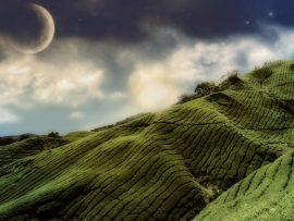 Papel de parede Plantação e Planeta
