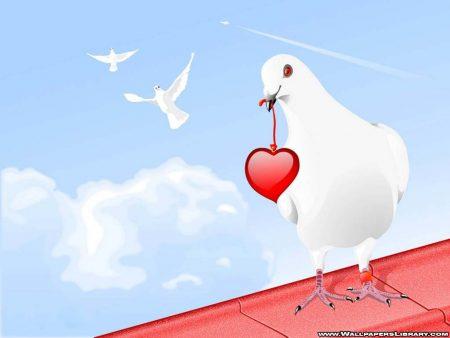 Papel de parede Pomba – Coração para download gratuito. Use no computador pc, mac, macbook, celular, smartphone, iPhone, onde quiser!