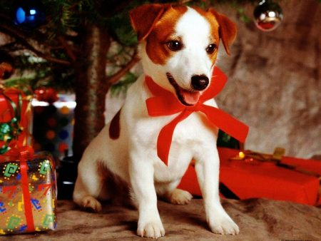 Papel de parede Presente de Natal – Cachorro para download gratuito. Use no computador pc, mac, macbook, celular, smartphone, iPhone, onde quiser!