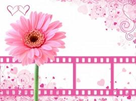 Papel de parede Rolo Rosa de Filme