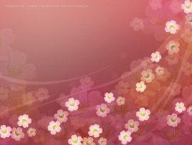 Papel de parede Sakuras