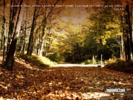 Papel de parede Salmo 18:30 para download gratuito. Use no computador pc, mac, macbook, celular, smartphone, iPhone, onde quiser!
