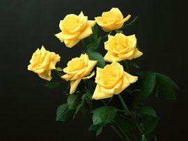 Papel de parede Seis Rosas