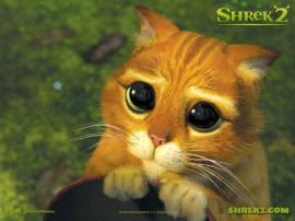 Papel de parede Olhar de Piedade: Gato de Botas-Shrek