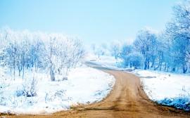Papel de parede Caminho Entre a Neve