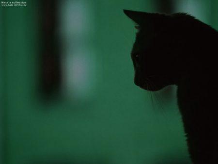 Papel de parede Sombra do Gato para download gratuito. Use no computador pc, mac, macbook, celular, smartphone, iPhone, onde quiser!