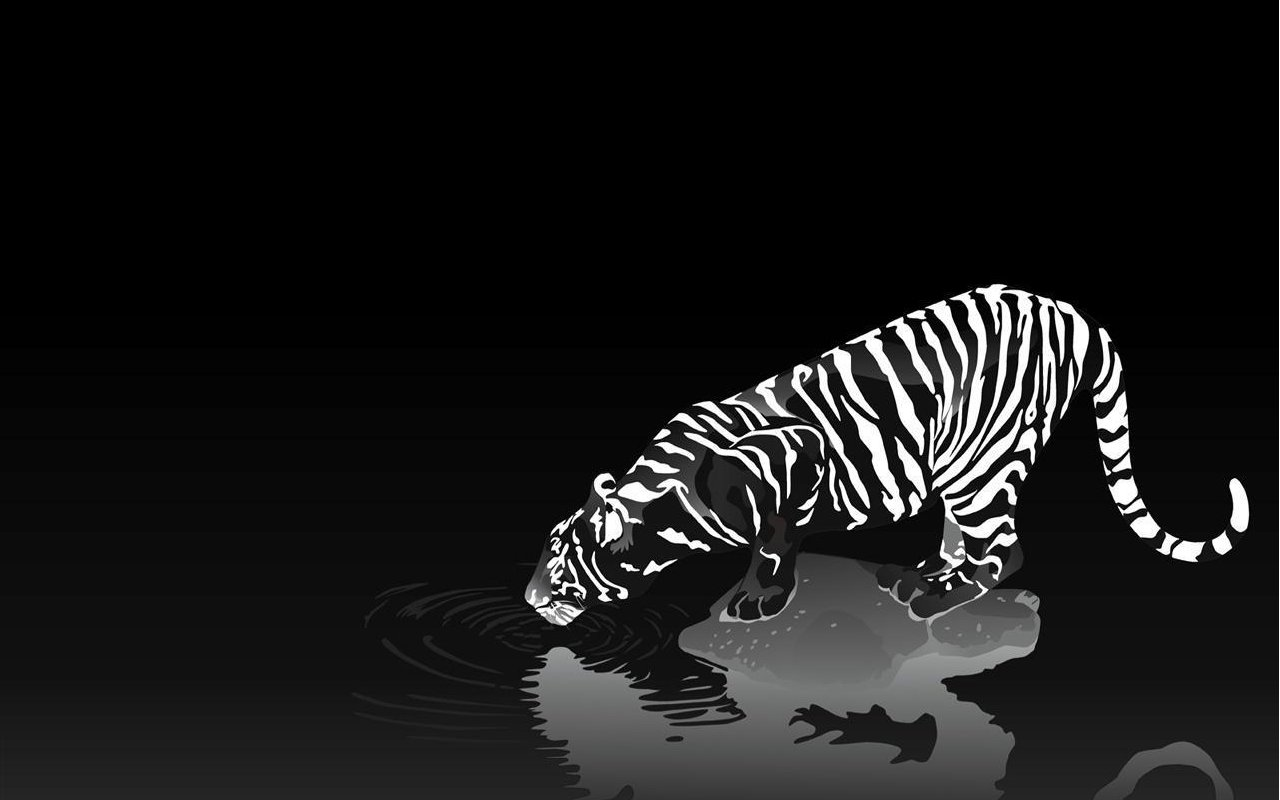 Papel De Parede Tigre Branco E Preto Wallpaper Para Download No