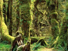 Papel de parede Troncos na Floresta