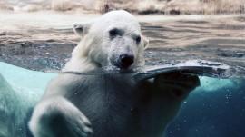 Papel de parede Urso Solar no Zoológico