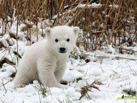 Papel de parede Ursos – Bebê