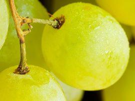 Papel de parede Uva – Fruta