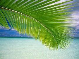 Papel de parede Vista Tropical