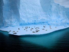Papel de parede Vivendo no gelo