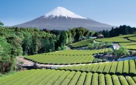 Papel de parede Japão – Incrível Monte Fuji