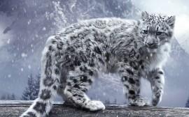 Papel de parede Leopardo branco na neve