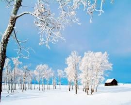 Papel de parede Árvores Congeladas no Inverno